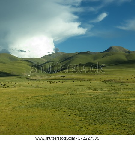 Mountain meadow sunset - stock photo