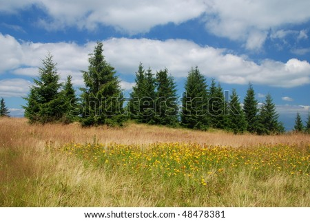 Mountain meadow with blooming yellow flowers of St. John's wort