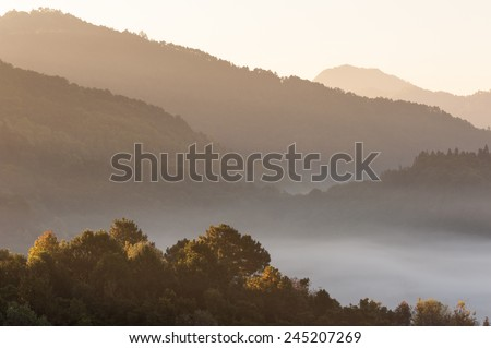 Mountain mist at doiangkhang  in Chiangmai,Thailand