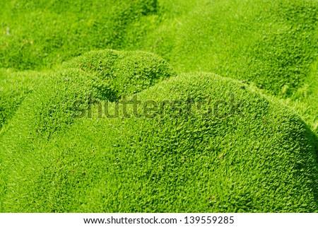 Mountain moss - stock photo