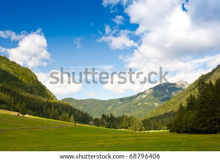 mountain pasture with cattle in spring in slovenia - stock photo