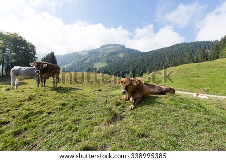 Mountain Pasture with typical residents - stock photo