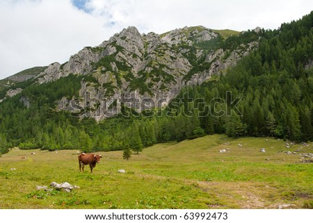 mountain pastures with cows, julijan alps, slovenia