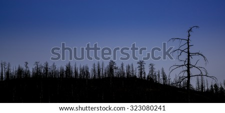 mountain pine forest destroyed by wildfire at Greyrock near Fort Collins, Colorado - tree silhouette against night sky - stock photo