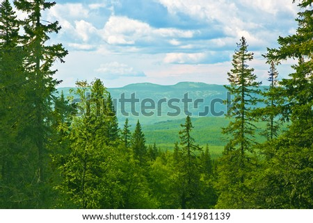 Mountain pines grow on slopes of mountains.