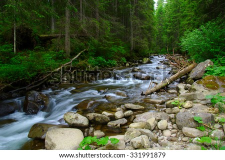 Mountain river flowing through the green forest. Stream in the wood. - stock photo