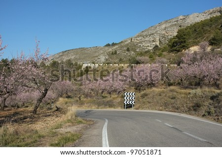 Mountain road running across almond tree blossom - stock photo