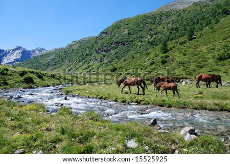 Mountain scene with wild horses at the river