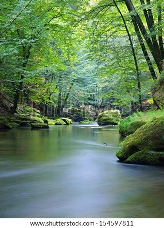 Mountain stream in fresh green leaves forest after rainy day. First autumn colors in evening sun rays.The end of summer at mountain river.  - stock photo