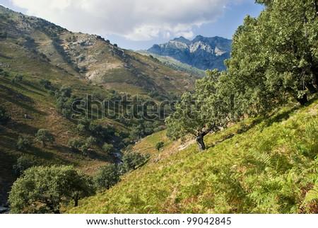 mountain stream in Sierra de Gredos. Spain - stock photo