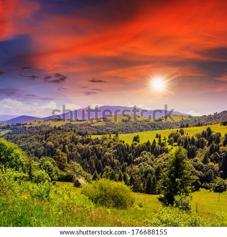 mountain summer landscape. pine trees near meadow and forest on hillside under  sky with clouds in sunset light