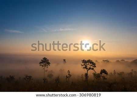 Mountain sunset forest landscape