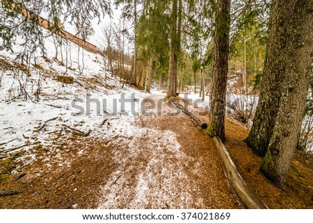 mountain trail in a forest of conifers on the snowy Alps in Italy