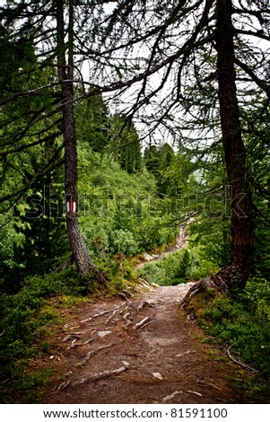 Mountain trail in a pines and firs forest like in a fantasy tale