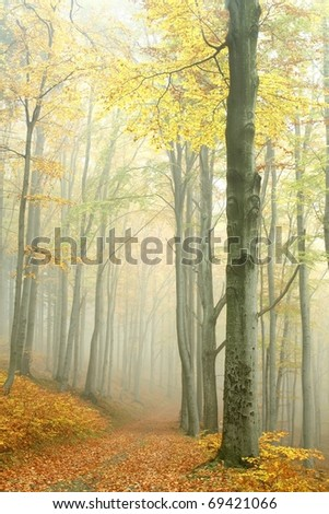 Mountain trail in the beech forest on a foggy autumn day. - stock photo