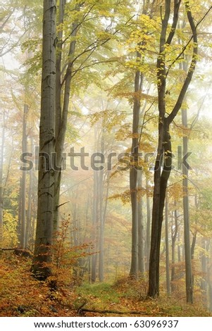 Mountain trail in the misty autumnal forest in a nature reserve. - stock photo