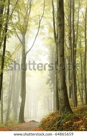 Mountain trail through the misty beech forest. Photo taken in October. - stock photo