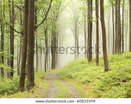 Mountain trail through the misty beech forest. Photo taken in September. - stock photo