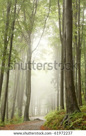 Mountain trail through the misty beech forest. Photo taken in September.