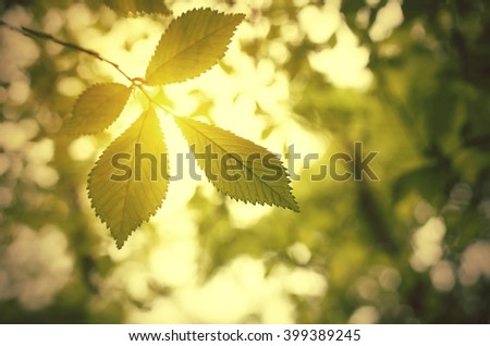 Mountain tree with selective focus of the foreground and bright sun with smooth light. Nature background in springtime with copy space and fresh green leaves. - stock photo