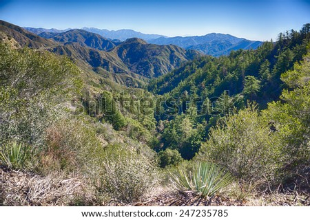 Mountain valley filled with tall green pine tree. - stock photo