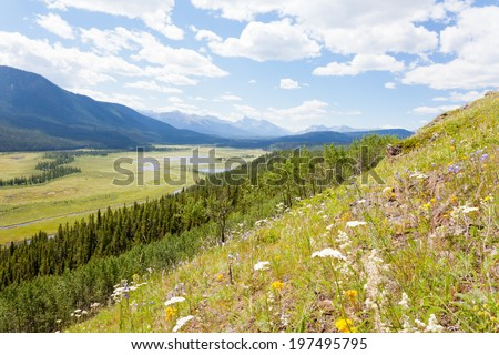 Mountain valley riparian wetland in Willmore Wilderness Park, Alberta, Canada, nature habitat landscape - stock photo
