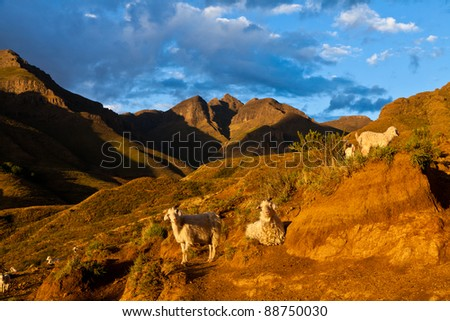 Mountain valley with goats lit by evening sun