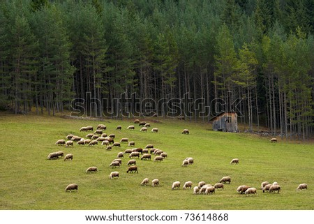 Mountain view from Bulgarian Rhodope with flock of sheep