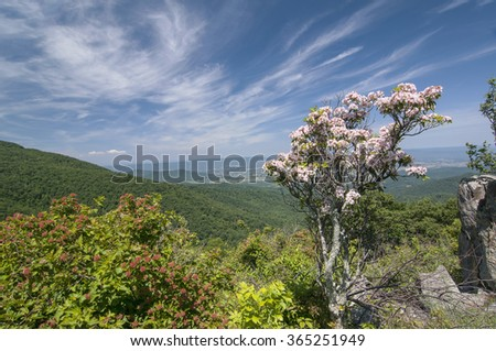 Mountain view with mountain laurel in full bloom