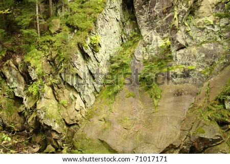 Mountain wall covered with trees, moss and rocks