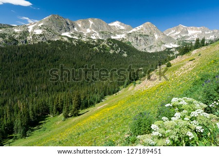Mountain wildflowers cover the Colorado landscape