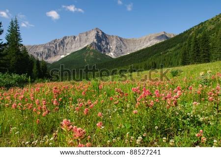 Mountain Wildflowers Kananaskis Country Alberta Canada - stock photo