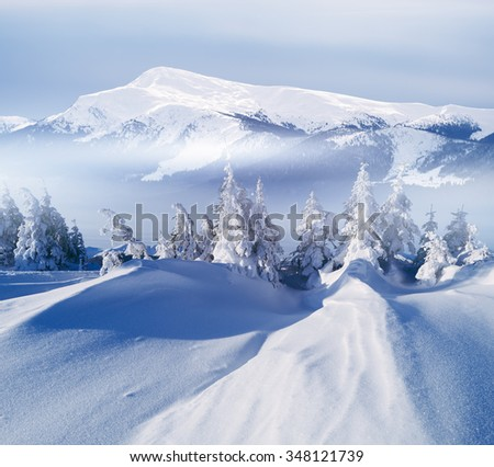 Mountain winter landscape. Sunny day. Fir trees on hill - stock photo