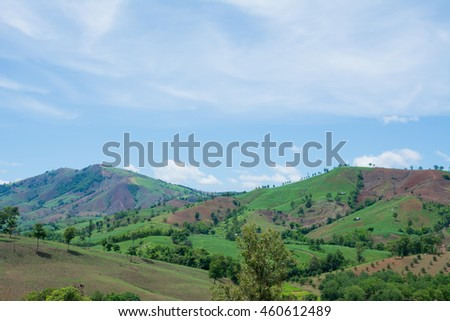 Mountain with forest background