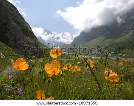 Mountains and flowers. Caucasus.