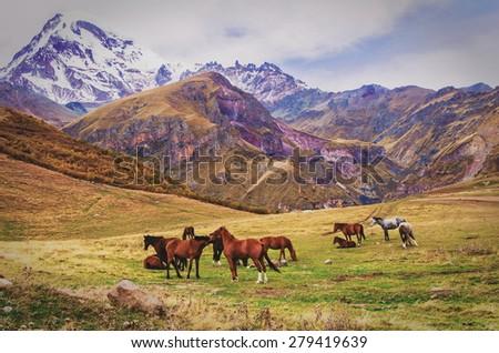 Mountains and horses Georgia.Kazbegi region,Vintage effect - stock photo