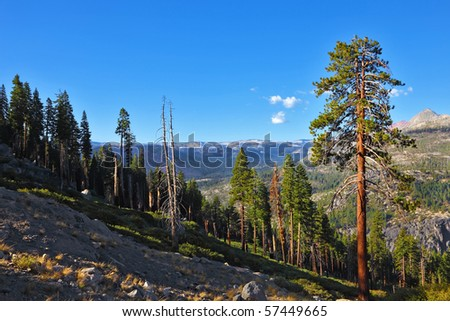 Mountains and pines on a sunset. A survey platform in Yosemite national park - Glacier Point.