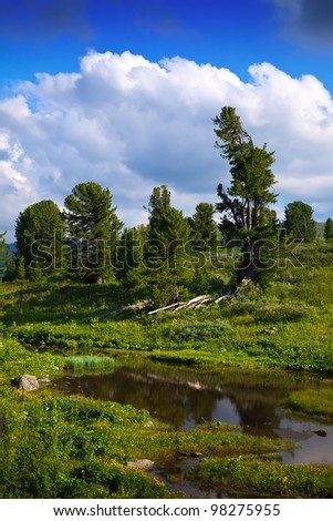 Mountains brook in sunny day. Altai, Siberia - stock photo