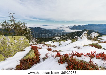 Mountains, green and red leaves blueberries. Carpathians - stock photo