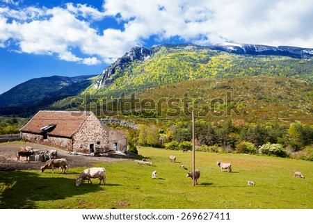 Mountains landscape,farm and cows in green fields - stock photo