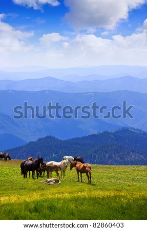 mountains landscape with  herd of horses. Altai, Siberia - stock photo