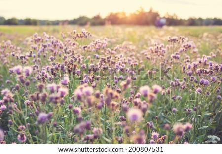 mountains meadow with retro vintage Instagram style - stock photo