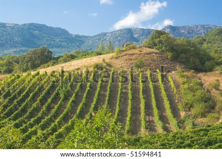Mountains, vineyard and summer. - stock photo
