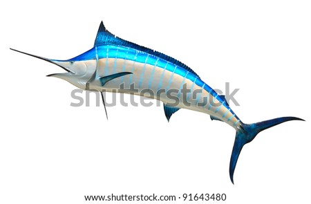 Mounted Blue Marlin isolated against a white background - stock photo