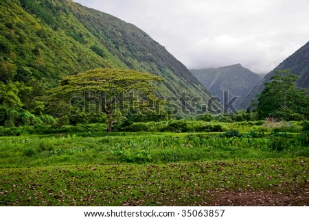 Mounts and jungle in foggy weather. Big island. Hawaii. USA - stock photo