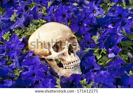 mourn for - stock photo