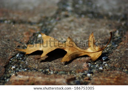 Mourning nature : oak leaf - stock photo
