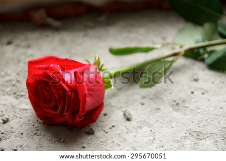 Mourning. Red rose on the concrete. - stock photo