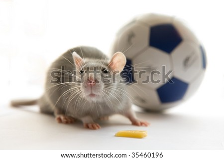 Mouse and ball