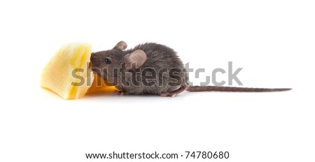 Mouse and cheese isolated on a white background